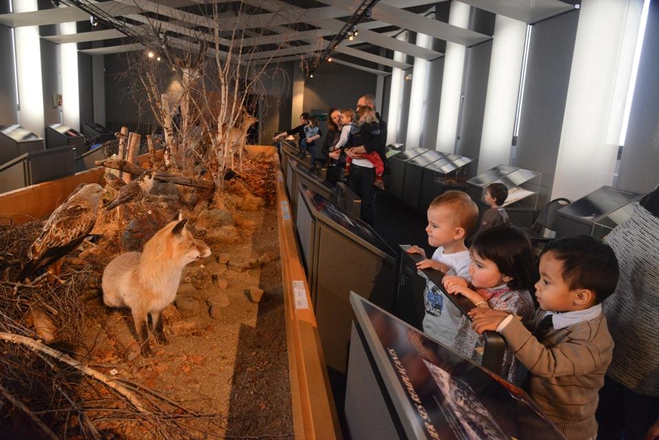 Raconte moi… les animaux du Cantal